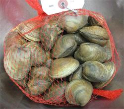 Servsafe MN tips for storing fresh shellfish