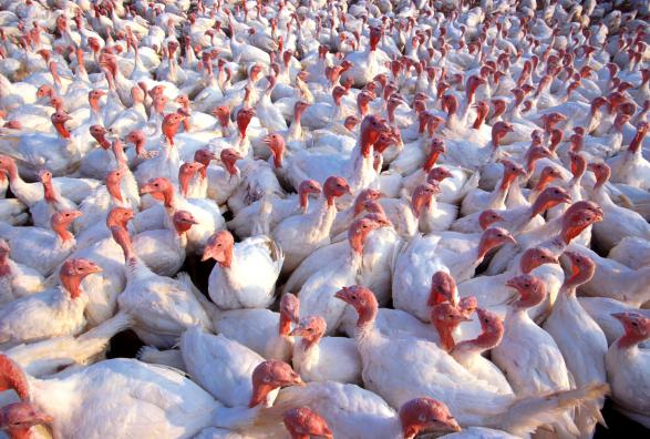 MN Food Safety Certification and Avian Influenza Training