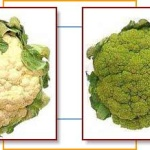 MN Certified Food Manager sub broccoli for cauliflower