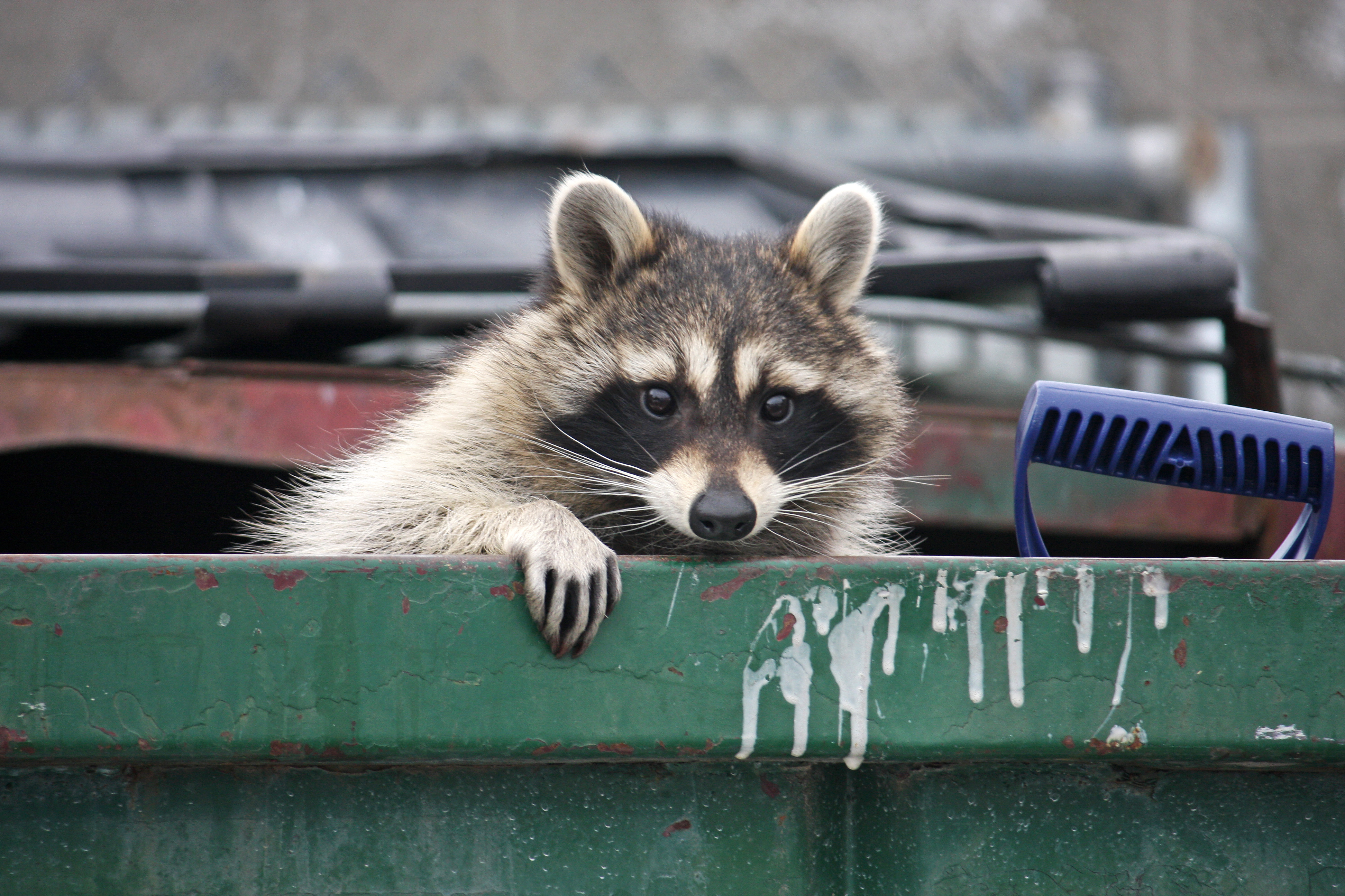 ServSafe MN Tips for Keeping Pests Out of Your Garbage